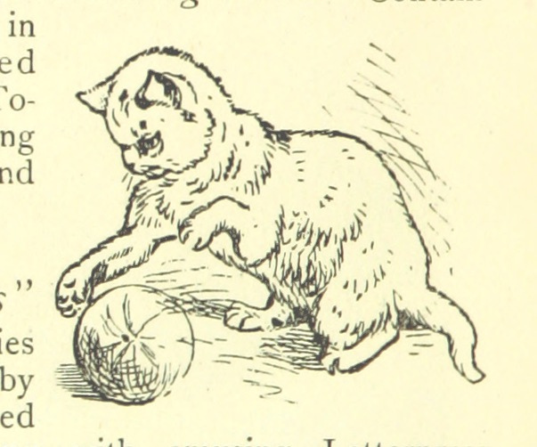 the land of temples - cat with ball