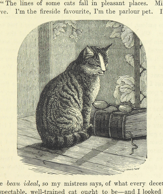 aileen aroon - a memoir of a dog