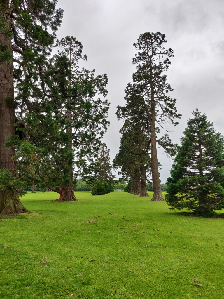 This image looks up an avenue of tall trees, towards the set of steps and viewing platform that were visible in the previous picture. Various different kinds of trees are visible, across an expanse of grass. The steps are in the far distance, and are only just visible.